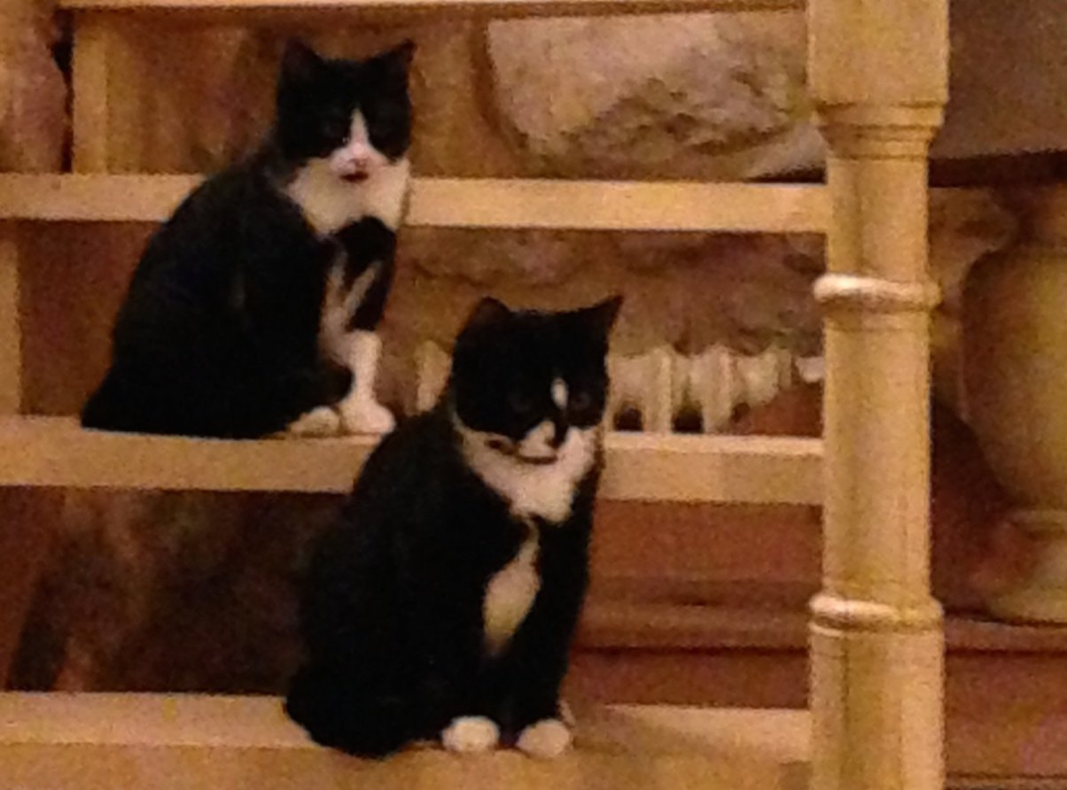 Mudita Adoptions - Felix and Felicia