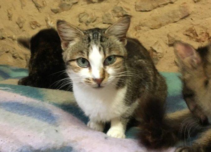 Mudita Adoptions - Petunia