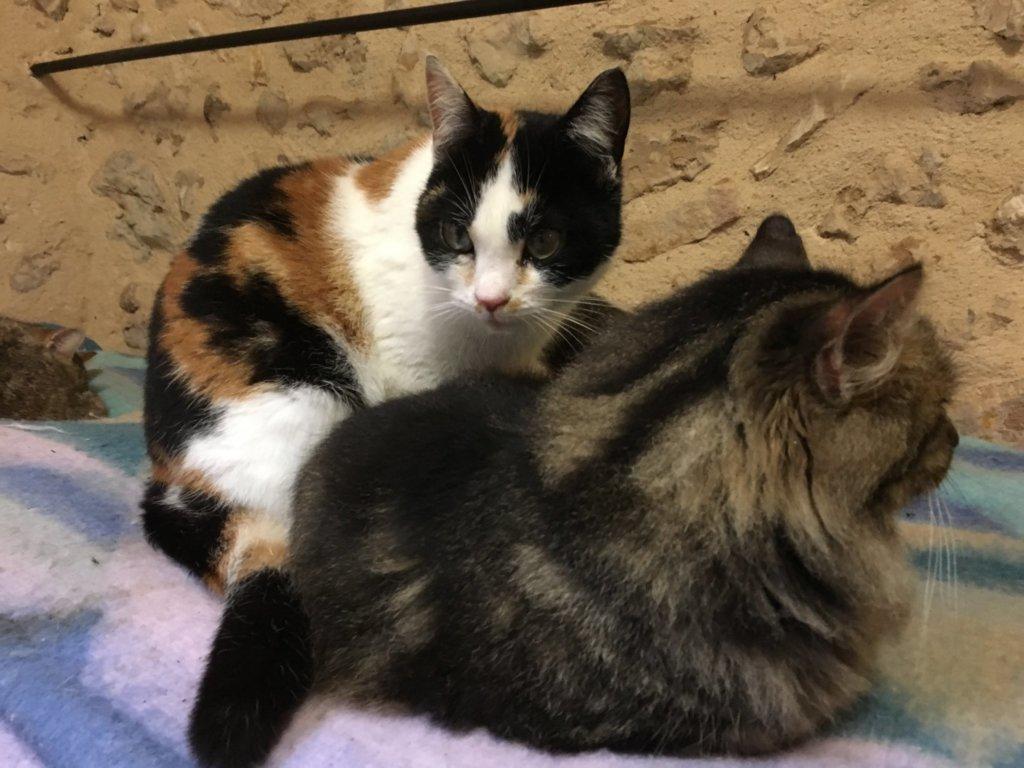Mudita Adoptions - Hopscotch & Fuzz