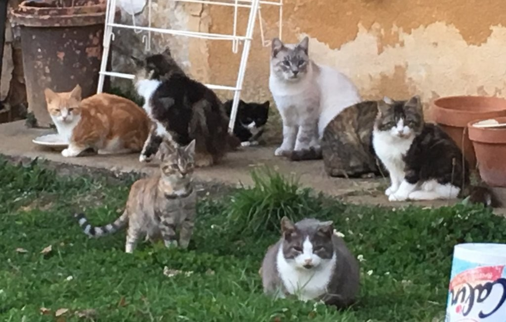 Mudita Adoptions - Kitten Fest