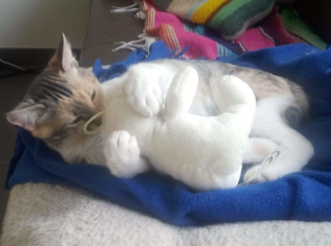 Mudita Guests -Kitty