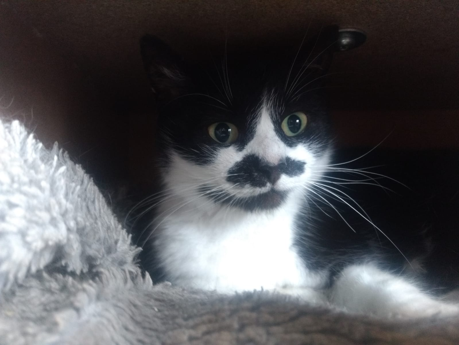 Mudita Sanctuary Adoptions - Moustache