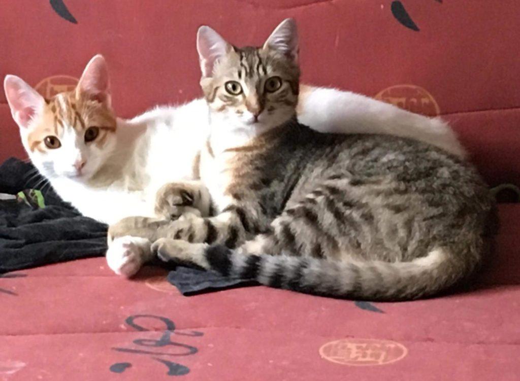Mudita - Paris and Remus