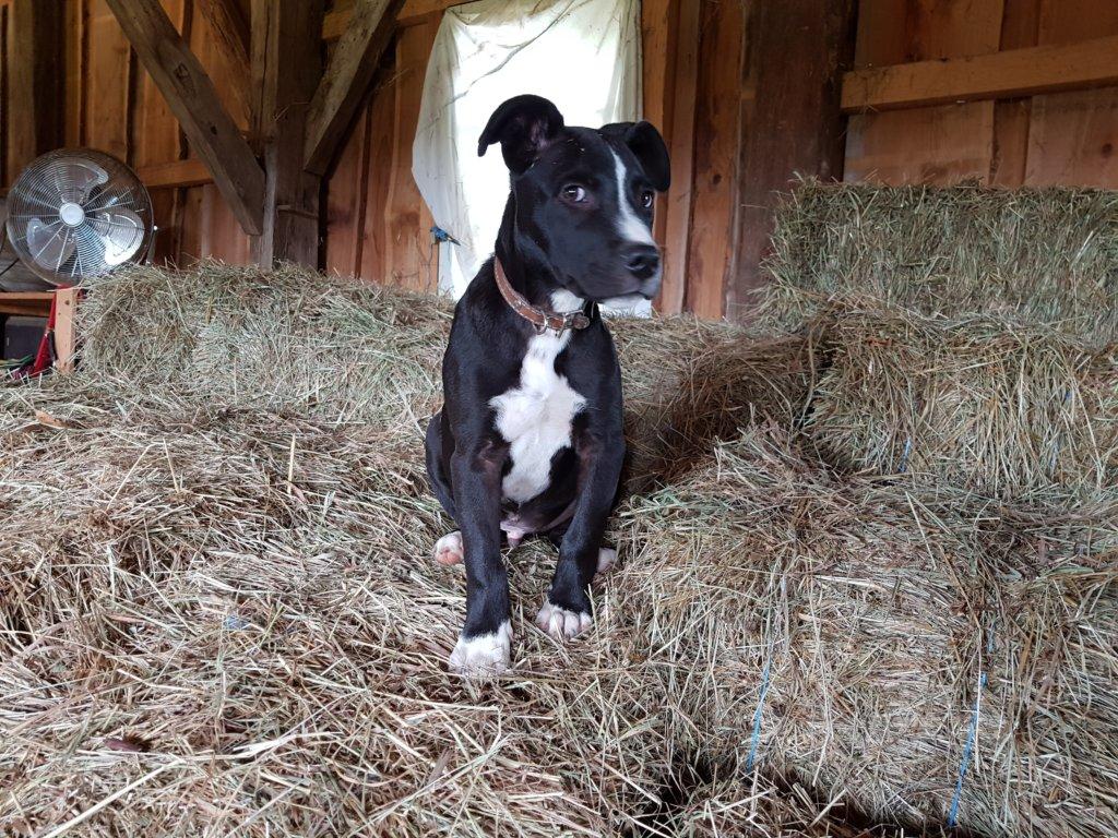 Mudita - Malone in the hay
