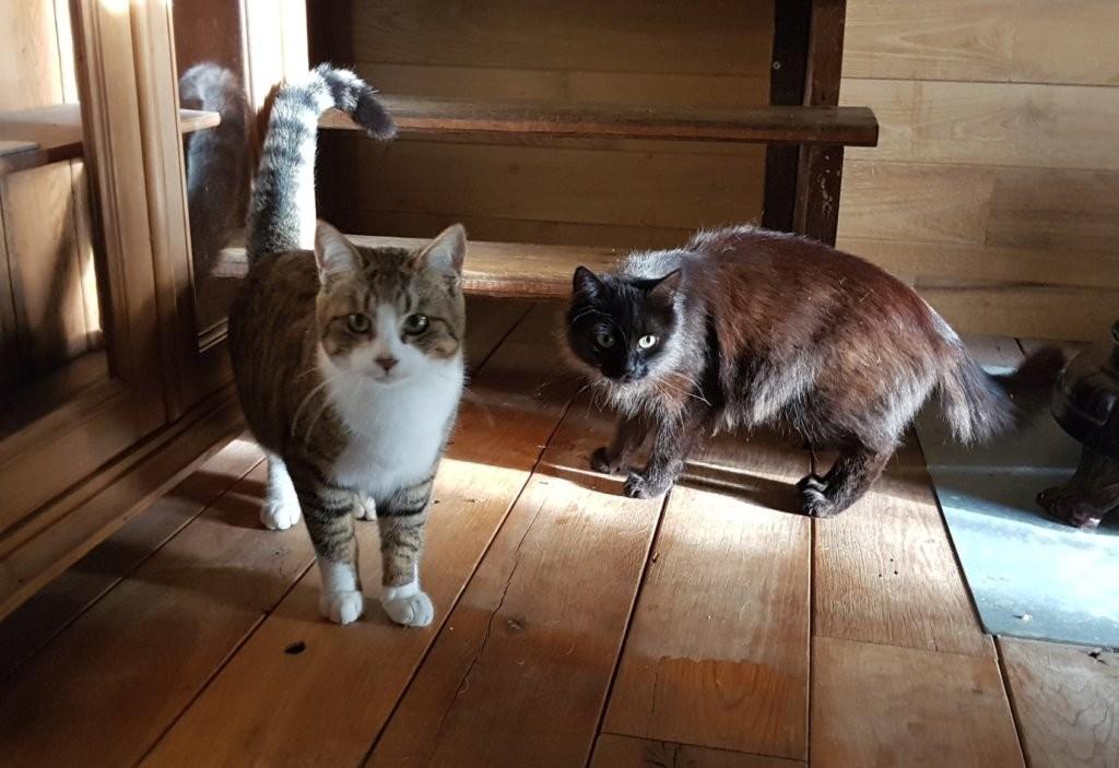 Mudita - Mowgli and Bagheera