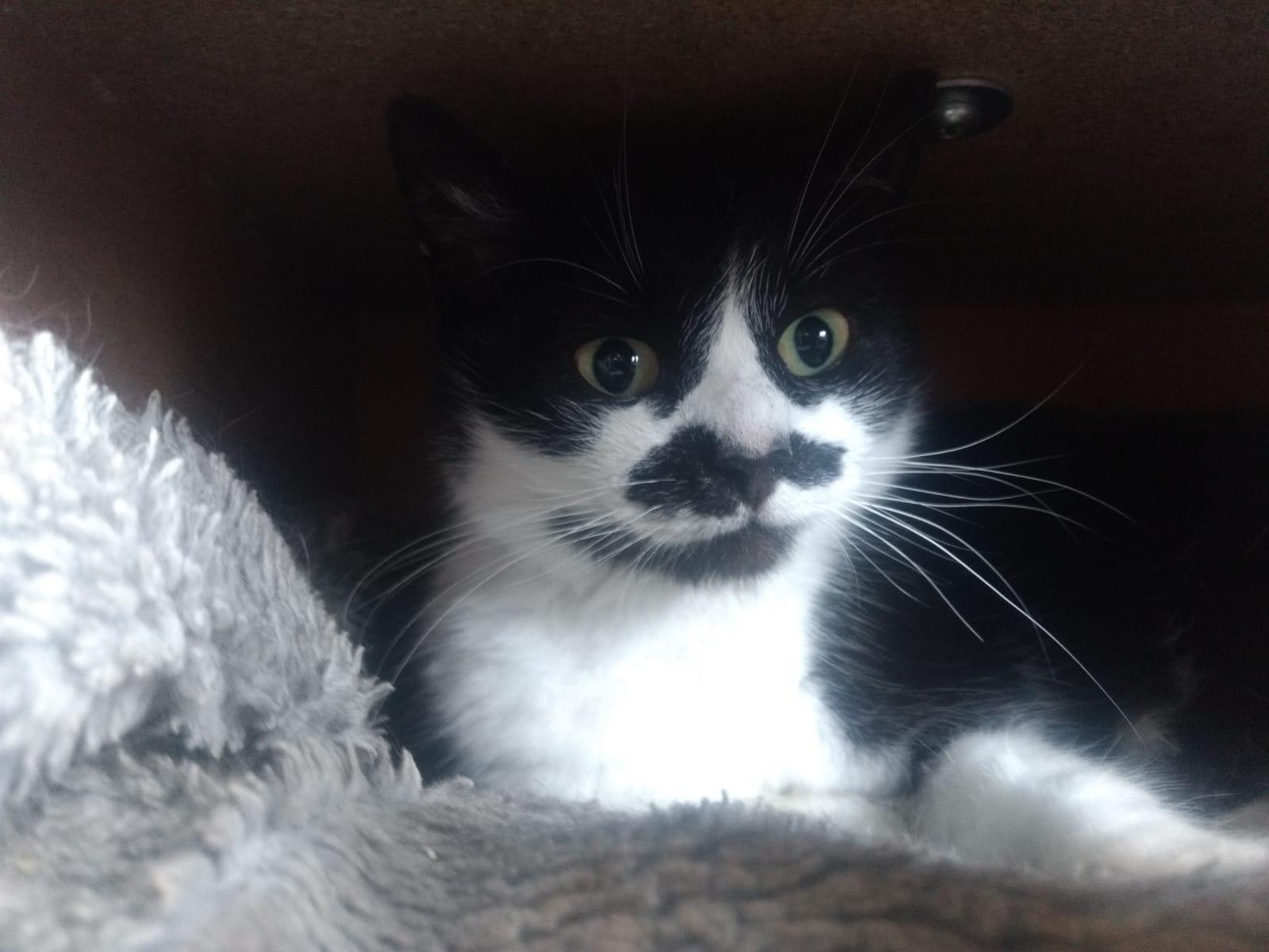 Mudita Sanctuary Adoptions - Moustache